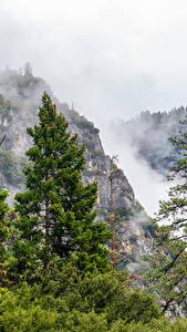 Fotos USA Park Gebirge Yosemite Fichten Nebel Bäume Natur