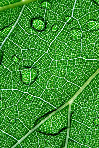 Bilder Großansicht Pflanzen Makro Textur Tropfen Grün