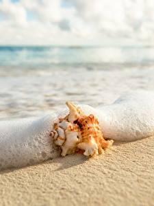 Bilder Muscheln Küste Nahaufnahme Wasserwelle Schaum Sand