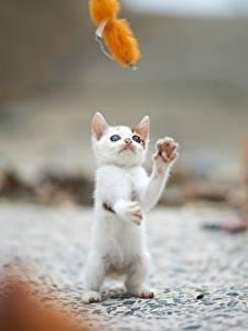 Bilder Katze Kätzchen