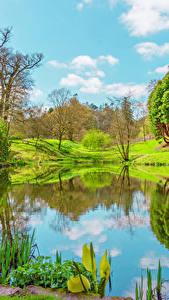 Fotos Vereinigtes Königreich Frühling See Landschaftsfotografie Bäume Powys County Wales