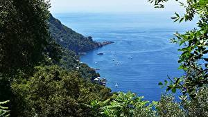 Wallpaper Coast Italy Sea Boats Branches Liguria Nature