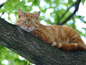 Bilder Katze Ast Orange rot Tiere