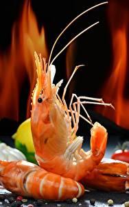 Hintergrundbilder Caridea Großansicht Lebensmittel