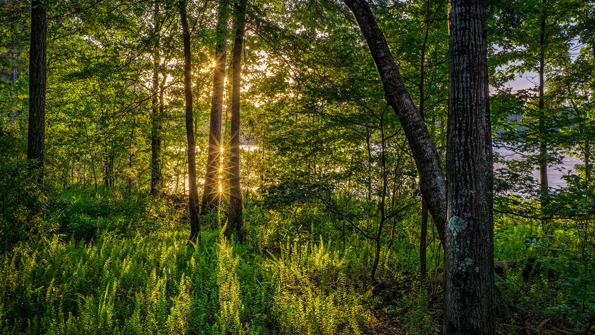 Desktop Wallpapers Rays Of Light Florida Usa Nature Forest