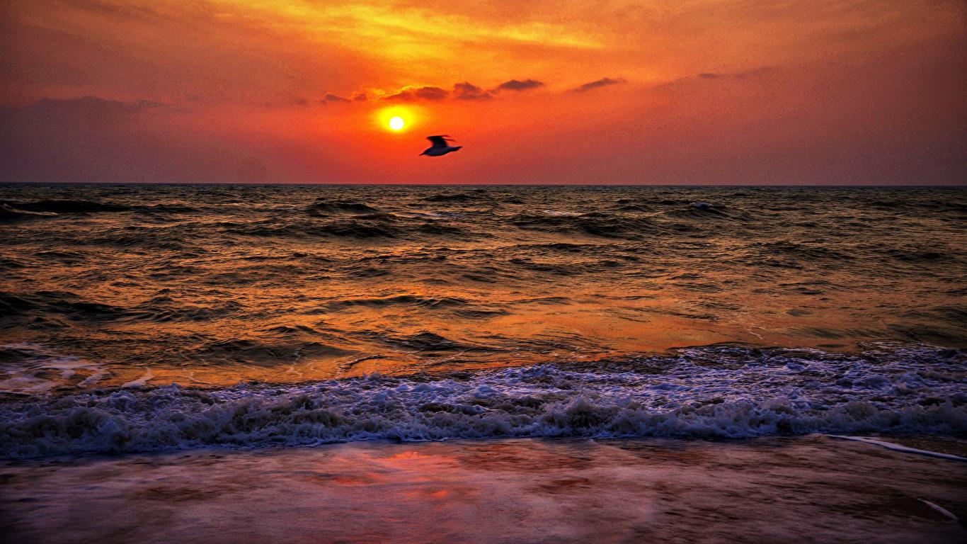 Wallpaper Bird Sea Nature Waves Sunrise And Sunset 1366x768