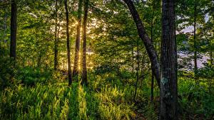 Bilder Vereinigte Staaten Wald Florida Bäume Gras Lichtstrahl Natur