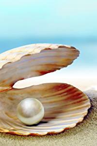 Hintergrundbilder Muscheln Perlen Großansicht Sand