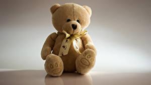 Fotos Teddybär Sitzt Schleife Grauer Hintergrund