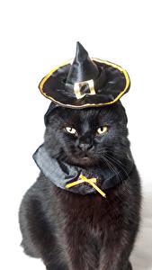 Fotos Halloween Katze Weißer hintergrund Schwarz Der Hut Blick Tiere