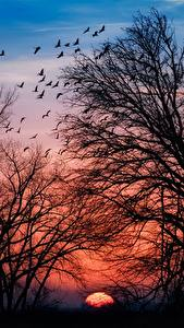 Wallpapers Sunrises and sunsets Trees Branches Silhouette Nature