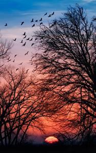 Fotos Sonnenaufgänge und Sonnenuntergänge Bäume Ast Silhouette Natur