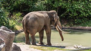 Fotos Elefanten Wasser Tiere