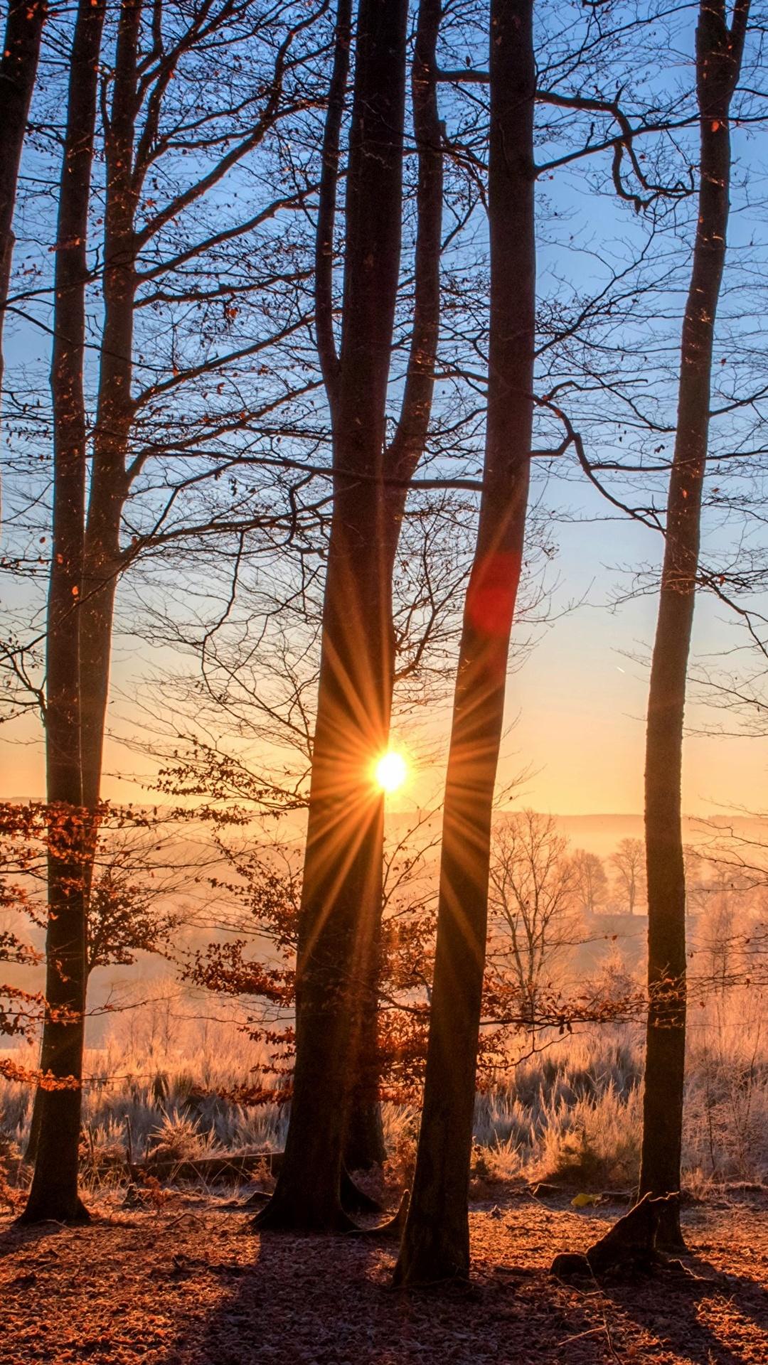 Fotos Von Lichtstrahl Natur Sonne Herbst Wald 1080x1920