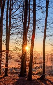 Hintergrundbilder Morgendämmerung und Sonnenuntergang Wald Herbst Sonne Bäume Lichtstrahl