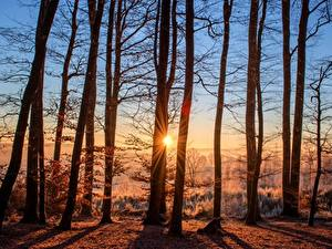 Images Sunrises and sunsets Forests Autumn Sun Trees Rays of light
