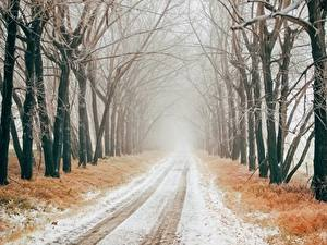 Pictures Winter Roads Snow Trees Allee Fog Nature