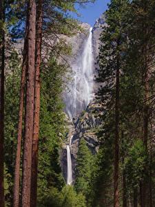 Bilder Vereinigte Staaten Park Wasserfall Yosemite Bäume Baumstamm Felsen Natur