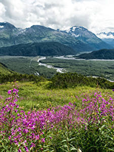 Fotos Alaska Landschaftsfotografie Gebirge Grünland Seward Natur