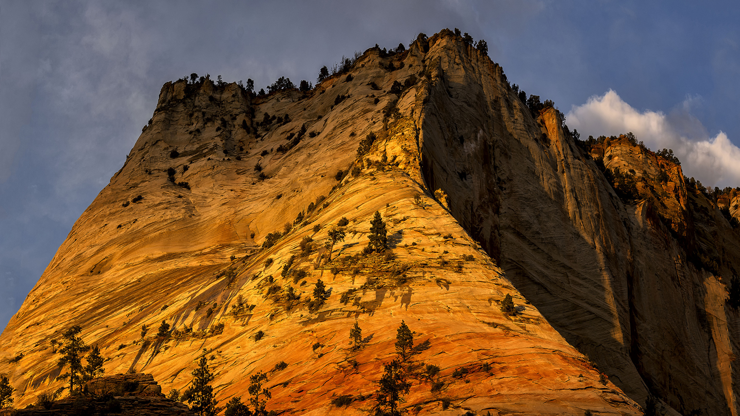 Images Zion National Park Usa Nature Mountain Parks 2560x1440