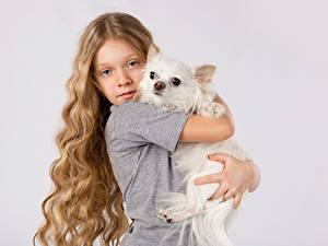 Hintergrundbilder Hund Grauer Hintergrund Kleine Mädchen Dunkelbraun Haar Chihuahua Blick Umarmung kind
