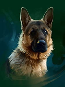 Bilder Gezeichnet Hunde Shepherd Starren