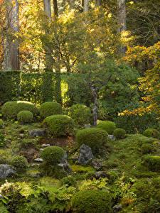 Bilder Kyōto Japan Park Steine Strauch Natur