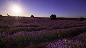 Fotos Spanien Landschaftsfotografie Sonnenaufgänge und Sonnenuntergänge Felder Lavendel Malacuera Natur