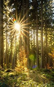 Bilder Wälder Lichtstrahl Bäume