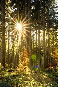 Bilder Wälder Lichtstrahl Bäume Natur
