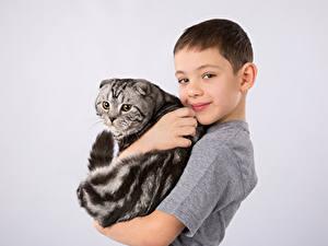 Fotos Katze Grauer Hintergrund Junge Lächeln Kinder Tiere