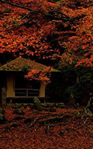 Bilder Japan Park Herbst Blattwerk Bäume Nara Park