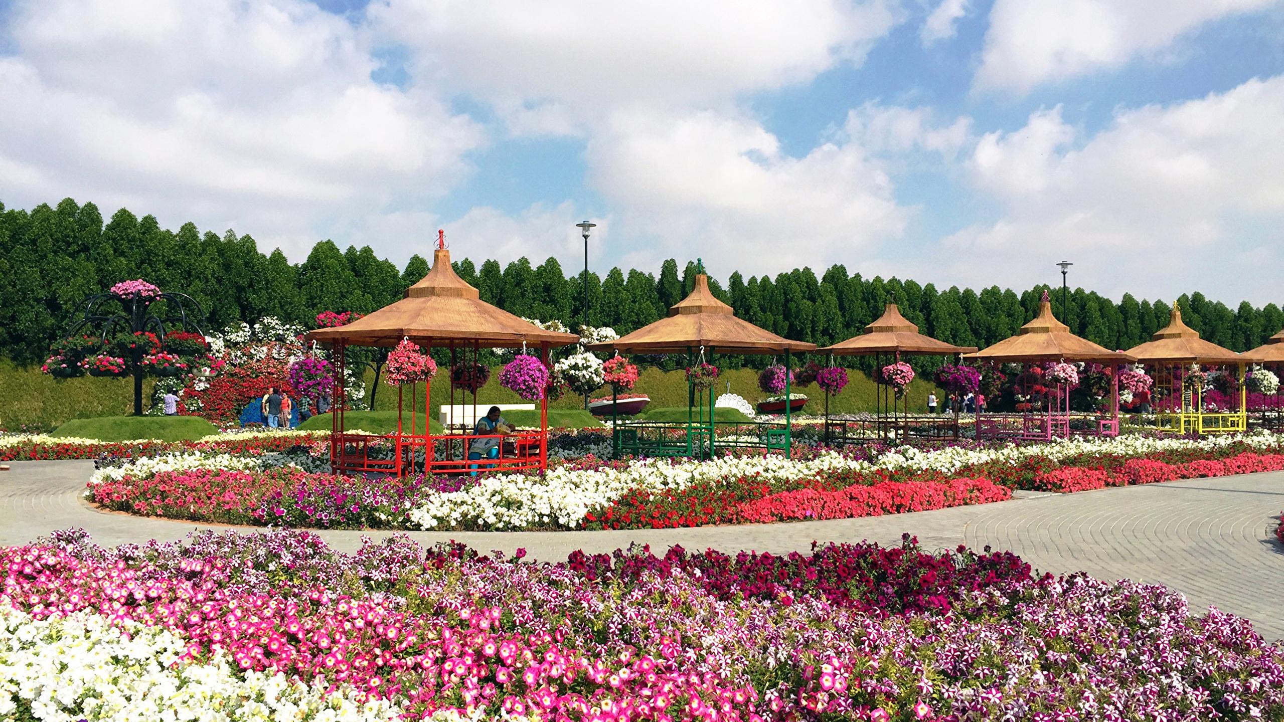Pictures Dubai Miracle Garden Nature Gardens Lawn Design 2560x1440