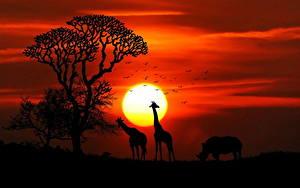 Bilder Giraffe Sonnenaufgänge und Sonnenuntergänge Nashörner Afrika Sonne Silhouette Tiere