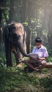 Images Asian Elephants Boys Sit Grass Children