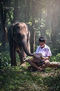 Fotos Asiatische Elefanten Junge Sitzend Gras Kinder