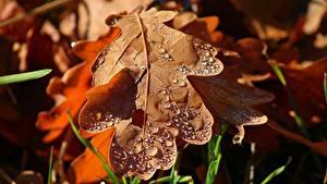 Hintergrundbilder Herbst Großansicht Blattwerk Tropfen Acorn