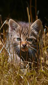 Hintergrundbilder Hauskatze Kätzchen Gras ein Tier