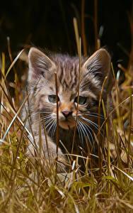 Hintergrundbilder Hauskatze Kätzchen Gras