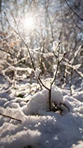 Hintergrundbilder Winter Schnee Ast Bokeh Natur