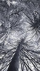 Hintergrundbilder Untersicht Ansicht von unten Ast Bäume Baumstamm Natur