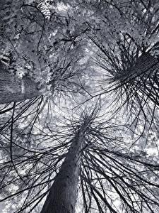 Hintergrundbilder Untersicht Ansicht von unten Ast Bäume Baumstamm