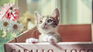 Fotos Hauskatze Katzenjunges Starren