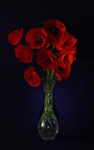 Hintergrundbilder Mohn Schwarzer Hintergrund Vase Rot Blumen