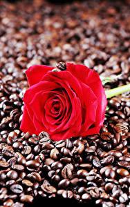 Desktop hintergrundbilder Rosen Kaffee Nahaufnahme Rot Getreide Blumen Lebensmittel