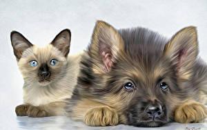 Bilder Katze Hunde Shepherd Welpe