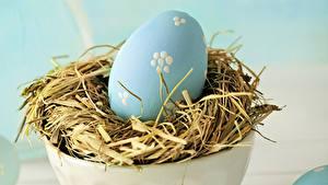 Bilder Feiertage Ostern Eier Nest Ast