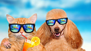 Wallpapers Cats Dogs Juice Two Poodle Glasses Funny Animals