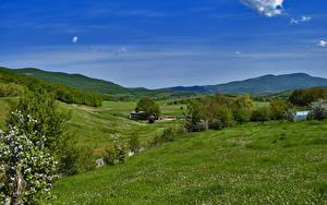 Bilder Russland Krim Landschaftsfotografie Felder Blühende Bäume Hügel Gras