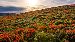 Wallpaper USA Sunrises and sunsets Fields Poppies California Lancaster Nature